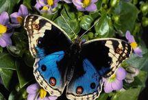 Kelebek dünyası.Butterfly world