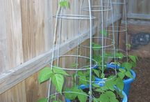 gardening and yard ideas / by Julie Virzi