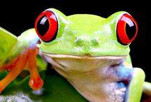 Frogkin