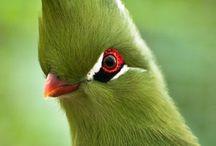couleur vert comme l'espoir