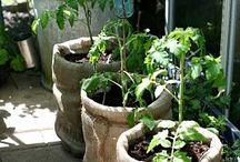 gardening ideas / by Pamela Forrest Slaugh
