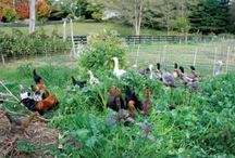 Cover Crops, Ideas for the future homestead