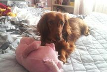 one dog ♡ one love
