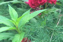 Naturaleza, fauna y flora / Plantas, animales, flores, colores de la naturaleza... Todos capturados en diferentes momentos de mi vida.
