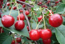 ogród cięcie drzew i krzewów owocowych