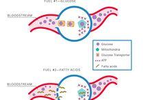 Science of Type 2 Diabetes