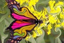 butterflies / by Venita Gilchrist