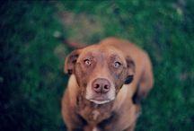 pies / stare zdjecie