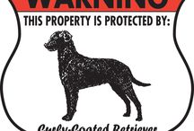 Curly-Coated Retriever Signs and Pictures