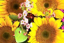 Flower arrangements / Beautiful flowers