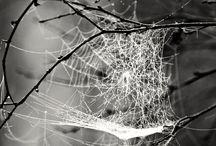 Spider Dreamcatchers