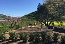 Favorite Wineries - Pine Ridge / Pine Ridge, off of the Silverado Trail, is one of our favorite wineries in Napa.  / by Inn on Randolph