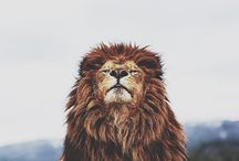 leão&leoa