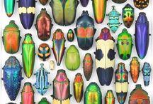 besouros e afins / Sempre gostei de desenhar besouros, borboletas, enfim insetos em geral!!!!