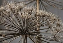 Seedheads - inspiring nature / Sculptural seedheads natural inspiration.