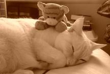Mi gatito Peluso