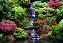 Big in Japan  / Japanese  gardens  / by Marie Sollén Gistrand