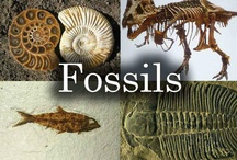 ☆●FASCINATING FOSSILS●☆ / This board contains pics of various fossils found around the world posted by our group board members. I hope you enjoy this board :-) Charl ( comments welcome )