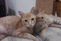 MyaMyoo  / Miss youu pus pus miaaw..