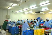 Vert Ltd. / Vert Ltd. est une entreprise kényane qui exporte des fruits et légumes frais en Europe. L'entreprise, créée en 2000, travaille directement avec de petits agriculteurs locaux organisés en petits groupes. L'entreprise fournit aux agriculteurs une assistance technique pour améliorer la qualité de leurs produits et s'assurer qu'ils sont mieux équipés pour faire face aux problèmes qui se posent. ©Didier GENTILHOMME