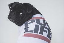 Dog Products + Accessories / A selection of great dog products and accessories from design products to dog clothing, collars, leads & harnesses to dog gadgets and more.
