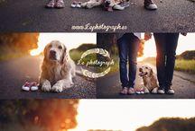 photoshoot puppies