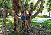 Träd från alla världens hörn