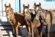 Scooby Medina, mi lugar favorito en el mundo / Sociedad Protectora de Animales de Medina del Campo con más de 25 años de trayectoria en el rescate de galgos y en los últimos años amplia su refugio para albergar a más de 1.000 animales de todas las clases, domesticos y de granja.