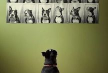 Photographies animaux
