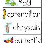 Project:3 butterflies/ A három pillangó