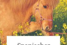 Zirkuslektionen Pferd