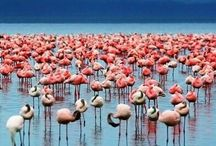 Birds / Pink