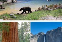 Yosemite national park⛰