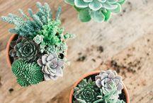 Green thumb / by Jennifer Michelle