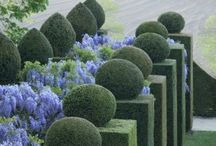 It takes balls... / Spherical plantings...yes, balls. / by Susan Cohan