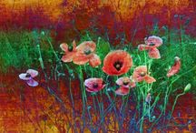 Floral Prints / Original photographic images of flowers