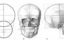 Анатомия , Мышцы,  Скелет