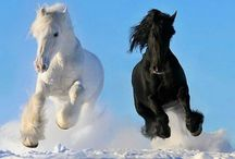 horses / by Phyllis Spicer