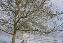 Ailleurs sous les étoiles : Winter time / A place to reconnect with nature