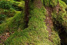 forestia...