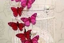 Butterflies and Cages