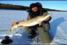 Ловля щуки на жерлицы. Огромная щука из подо льда.