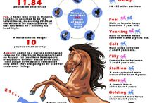 About horses for the girls