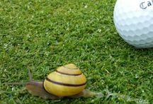 Golf and animals