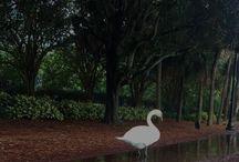 Orlando Area Activities