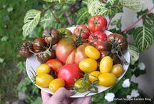 The Harvest Table / Reaping the Rewards of an Edible Garden
