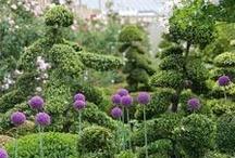 Les jardins et les plantes / L'Anjou regorge de beaux jardins et nous allons en découvrir quelques-uns.  Et dévoiler les fournisseurs pour créer un beau jardin.