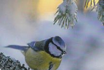 Winter Wonder Birds.