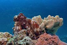 Underwater Photo / Underwater Photo Board