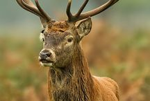 deer / by lally latimer